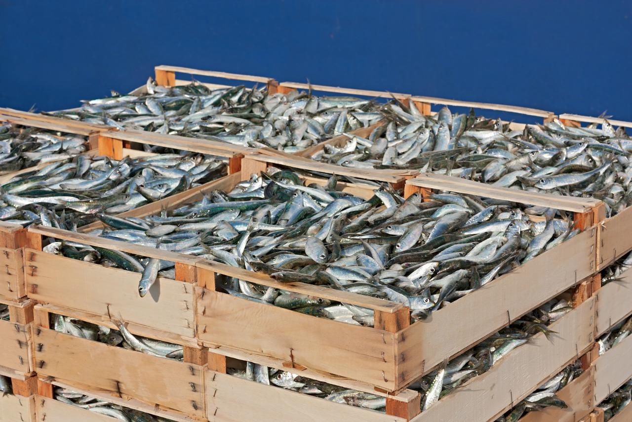 pallet of sardines