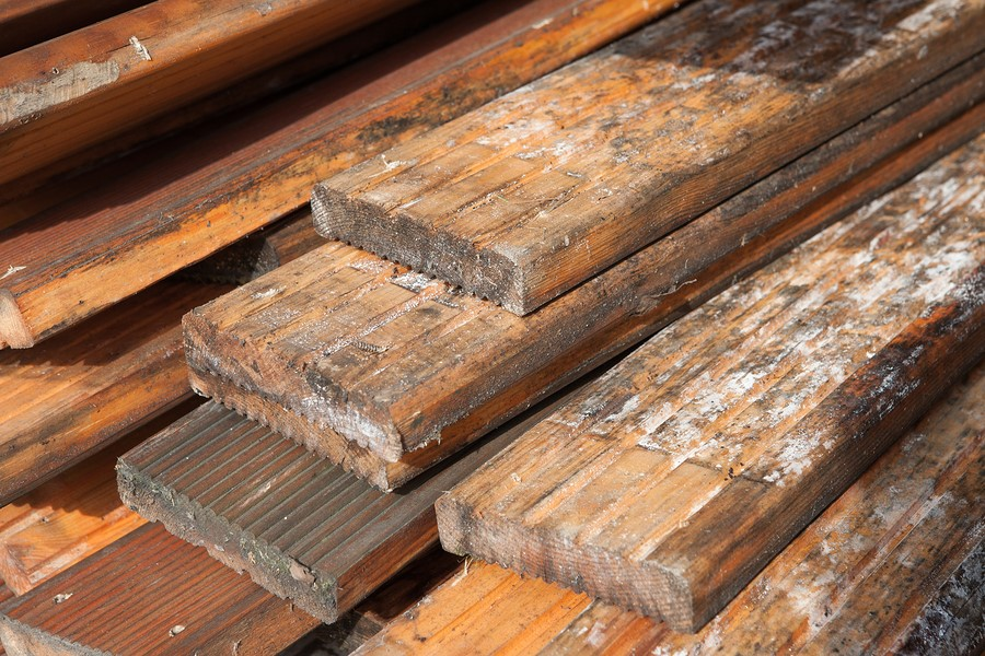 Mould and pallets – warmer months increases growth